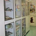 Аптека и зоотовары 12