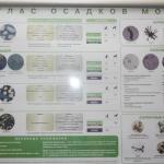 Лаборатория 10