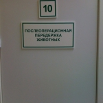 posleoperacionnaya-perederzhka-zhivotnykh-1